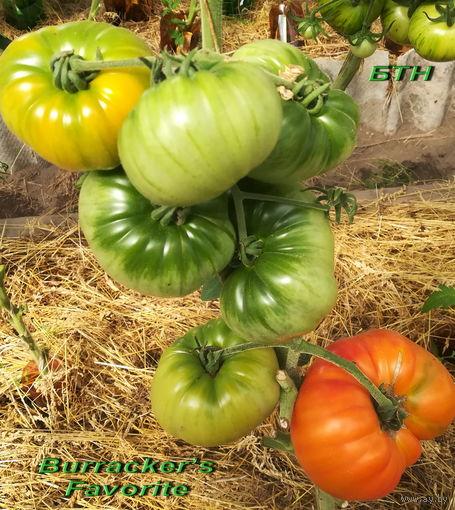 Семена томата Бурракерские любимцы(Burracker s Favorite)