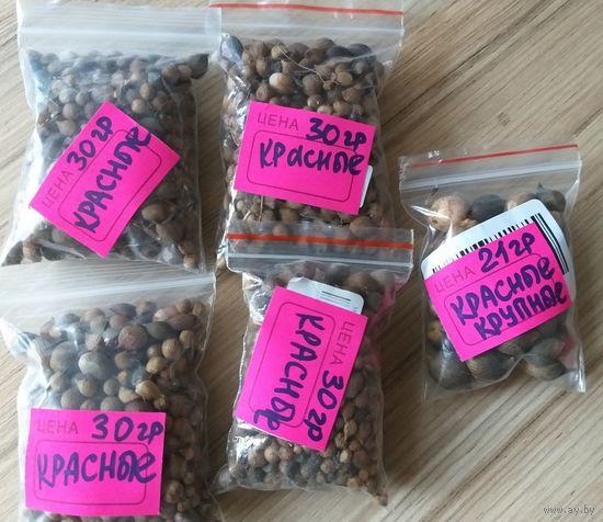 Семена-детки гладиолусов продам, белого и красного цвета