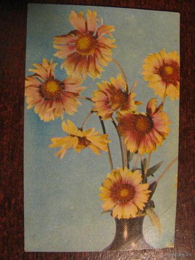 Цветы  1968