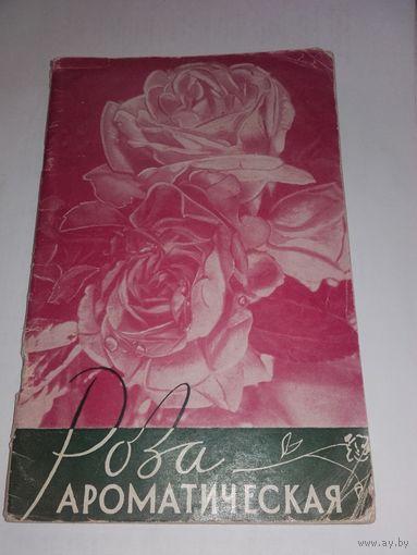 Роза ароматическая