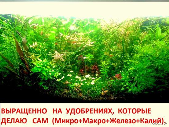 Удобрения(микро, макро, калий, железо) для аквариумных растений. ПОЧТОЙ и МАРШРУТКОЙ отправлю.