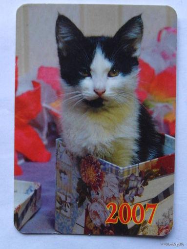 Карманный календарь котик 2007г.   распродажа