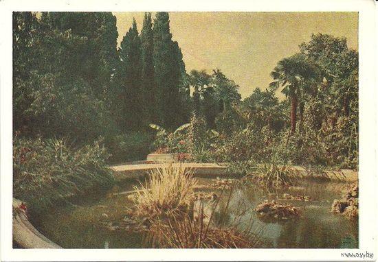 ПК Крым. Никитский ботанический сад им. В.М.Молотова 1954г.