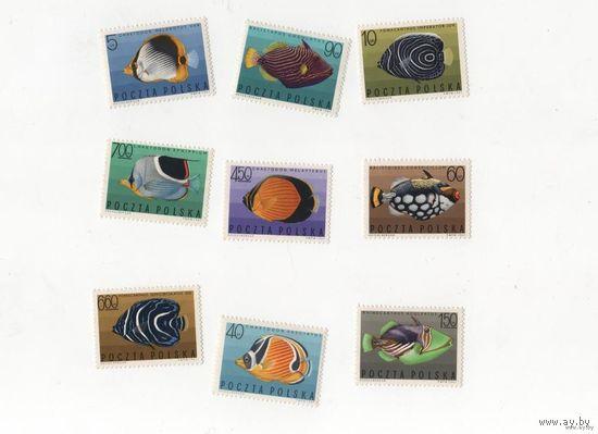 Тропические рыбы Польша 1967 г