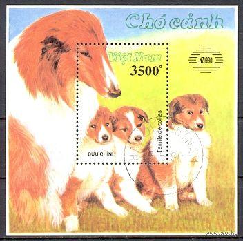 Вьетнам. 1990. Международная выставка марок в Новой Зеландии. Собаки (Блок