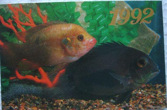 Календарик 1992 г. Рыбки (цена за один)